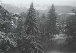 Snow Falling on Campus Trees