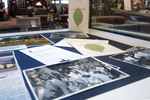 Freshmen: Then and Now Exhibit Case - Photo 4